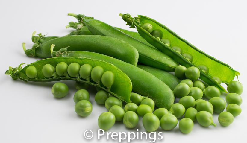 English Pea