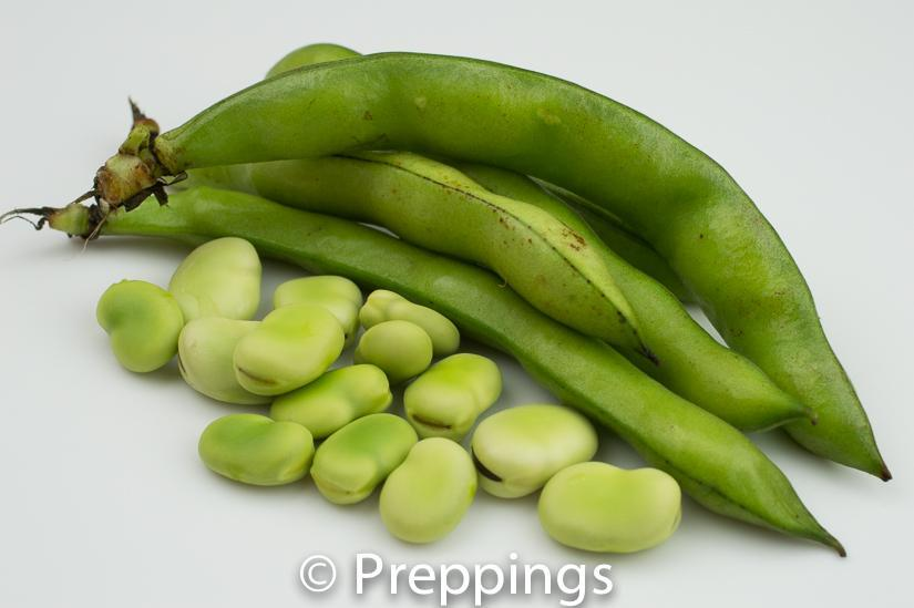 Ingredient Of The Day: Fava Bean