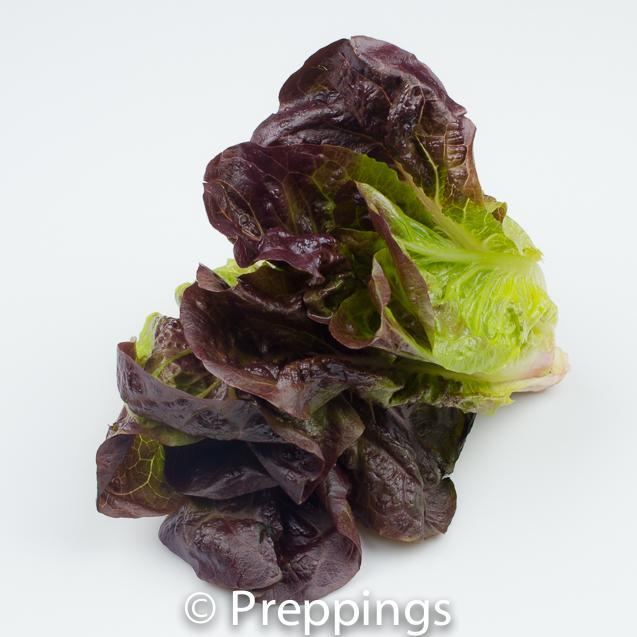 Purple Gem Lettuce