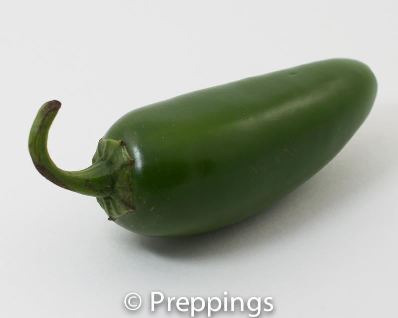 Jalapeño Chile Pepper