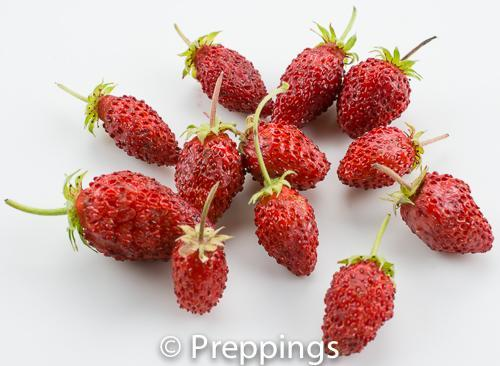 Ingredient Of The Day: Fraises des Bois Strawberry