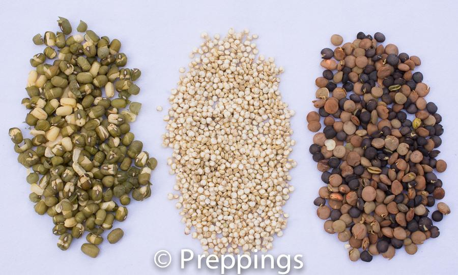 The Trend Of Sprouting