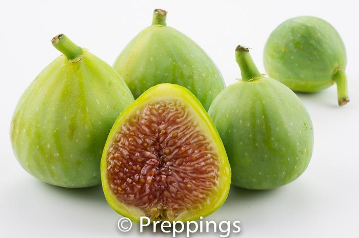 Ingredient Of The Day: Adriatic Fig