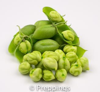 Fresh Garbanzo Bean