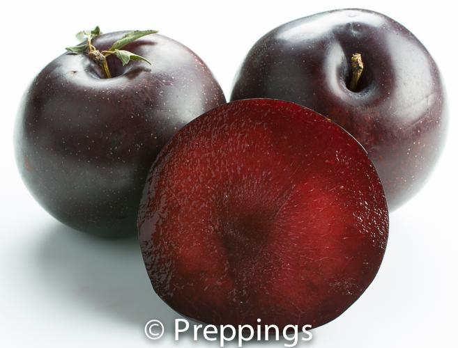 Black Cherry Pluot