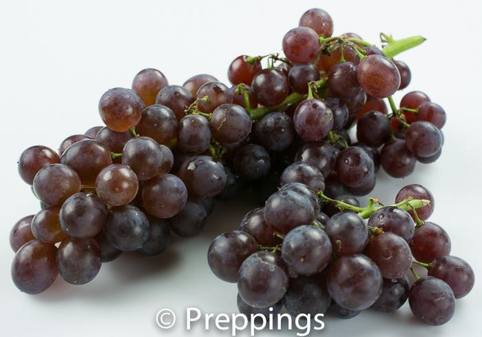Champagne Grapes