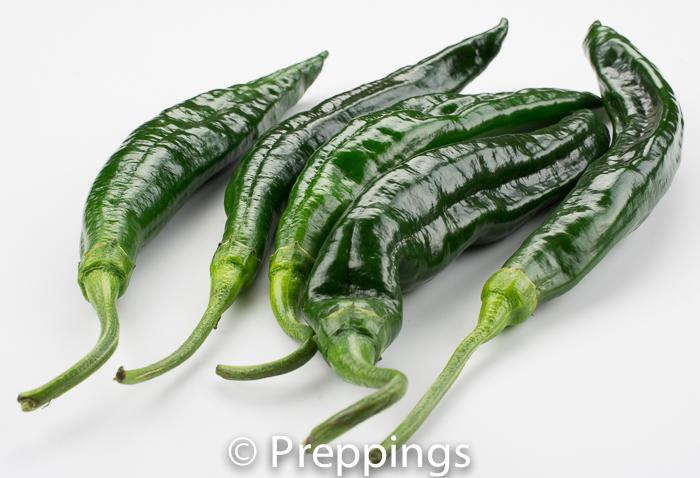 Chilaca Chile Pepper