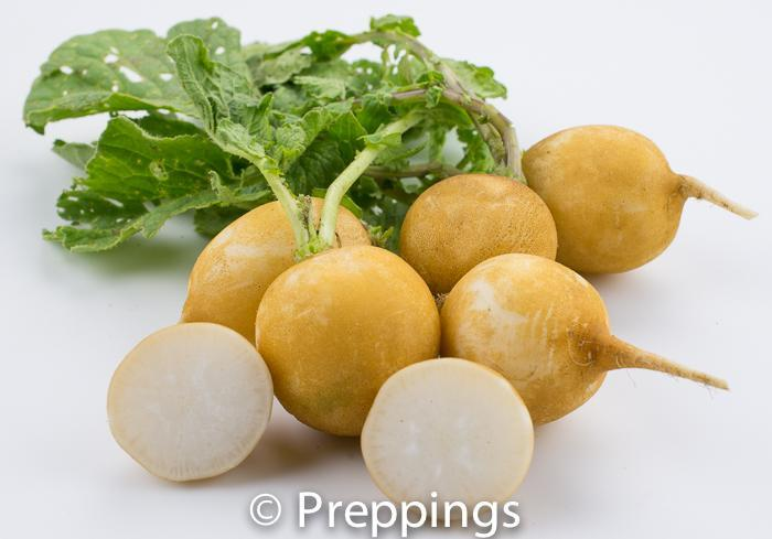 Golden Antique Radish