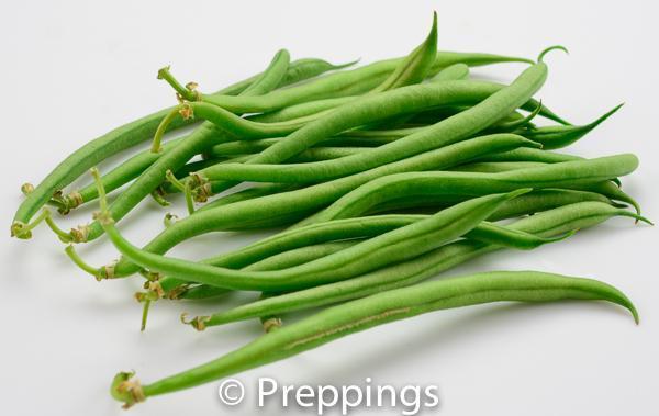 Haricot Vert