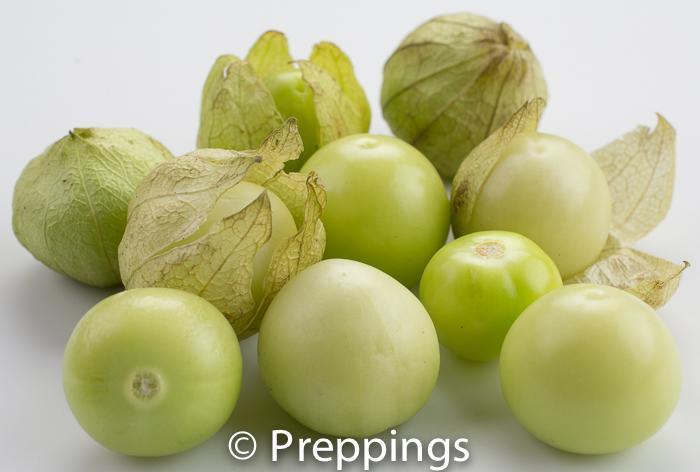 Milpero Tomatillo