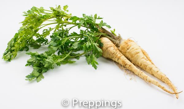 Ingredient Of The Day: Parsley Root