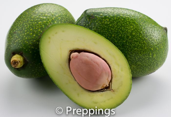 Ingredient Of The Day: Pinkerton Avocado