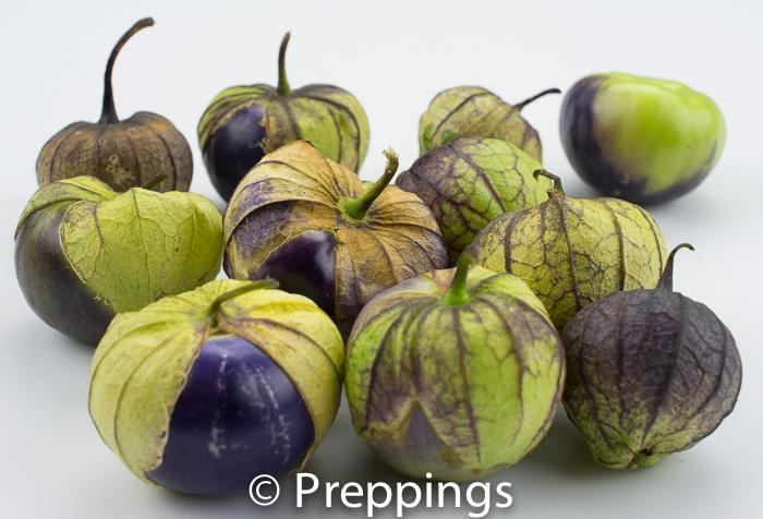 Ingredient Of The Day: Purple Tomatillo