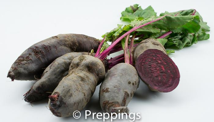 Ingredient Of The Day: Red Forno Beet