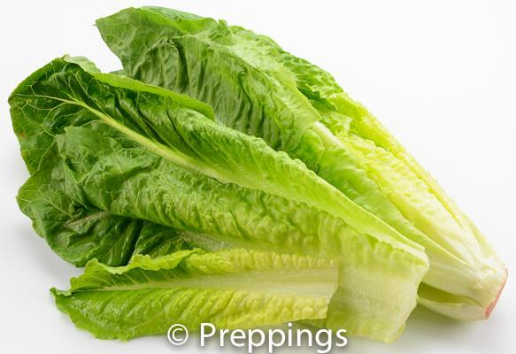 Romaine Heart Lettuce