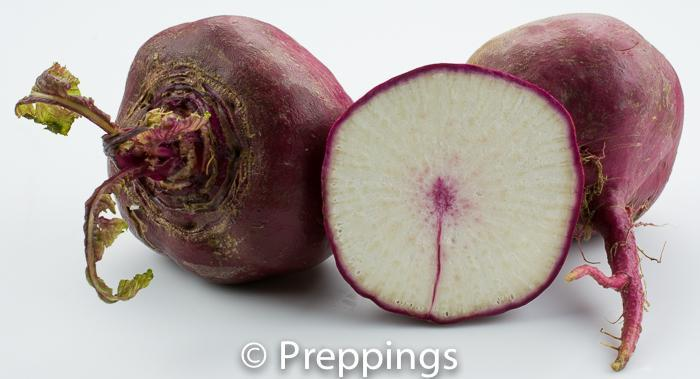 Scarlet Rose Turnip