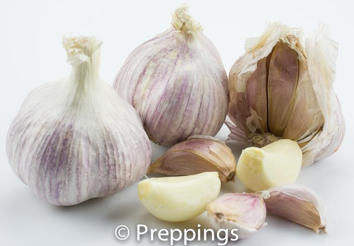 Spanish Red Garlic