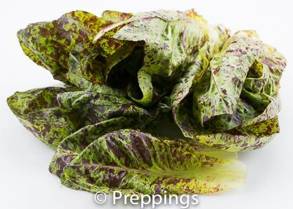Ingredient Of The Day: Speckled Romaine Lettuce