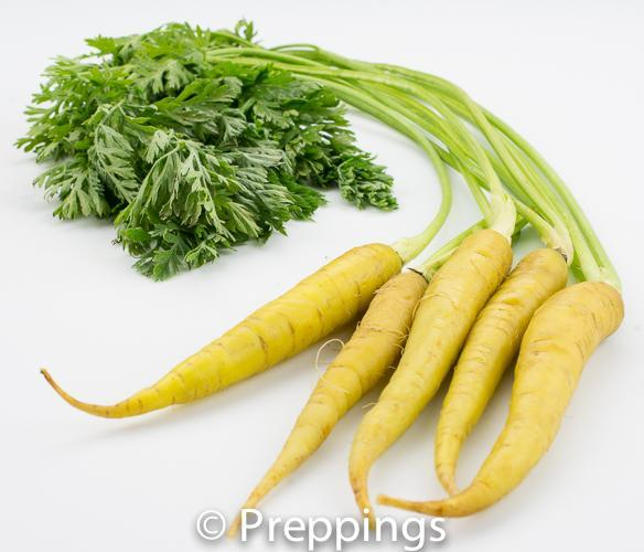 Ingredient Of The Day: Yellowstone Carrot