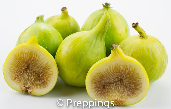 Ingredient Of The Day: Kadota Fig