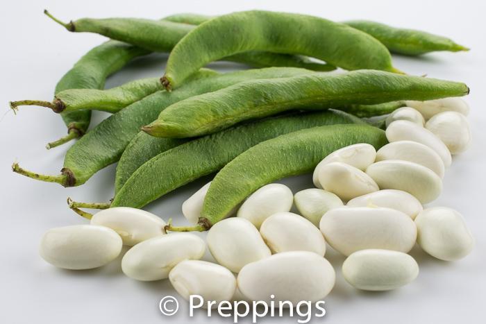 Fresh Lima Bean