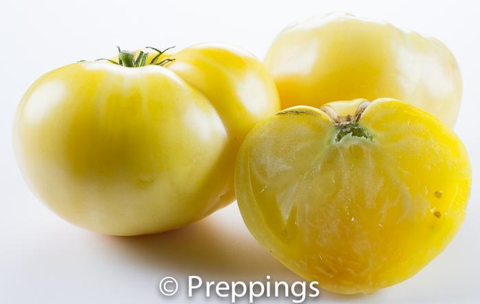 Great White Tomato