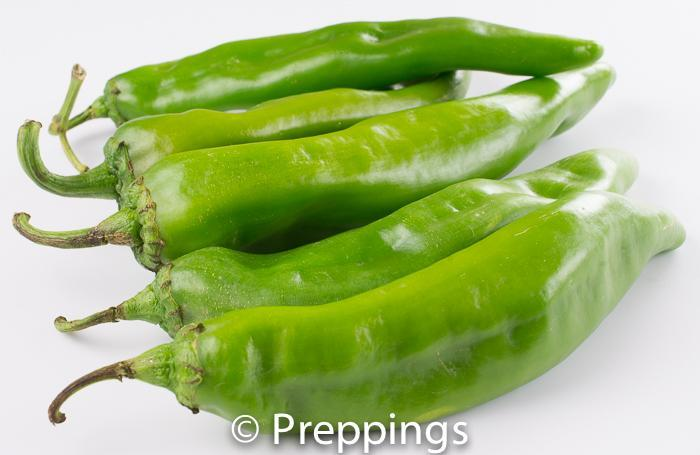 New Mexico Green Chile Pepper