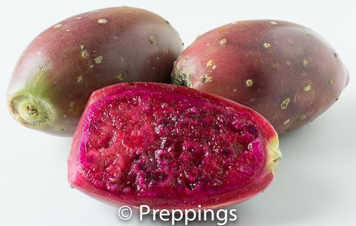 Red Prickly Pear
