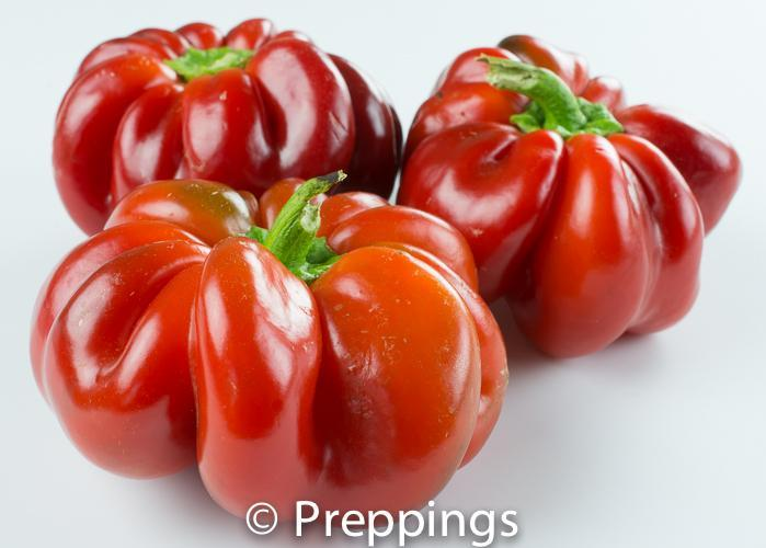 Round Of Hungary Chile Pepper