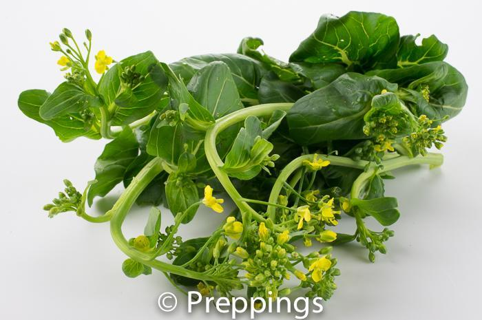 Ingredient Of The Day: Choy Sum