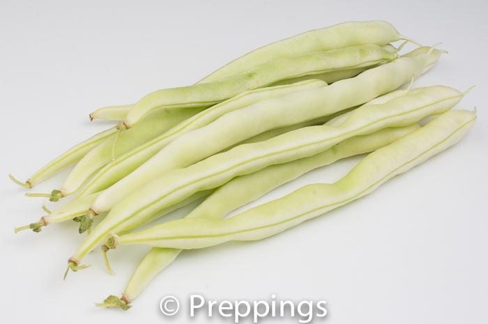 White String Bean