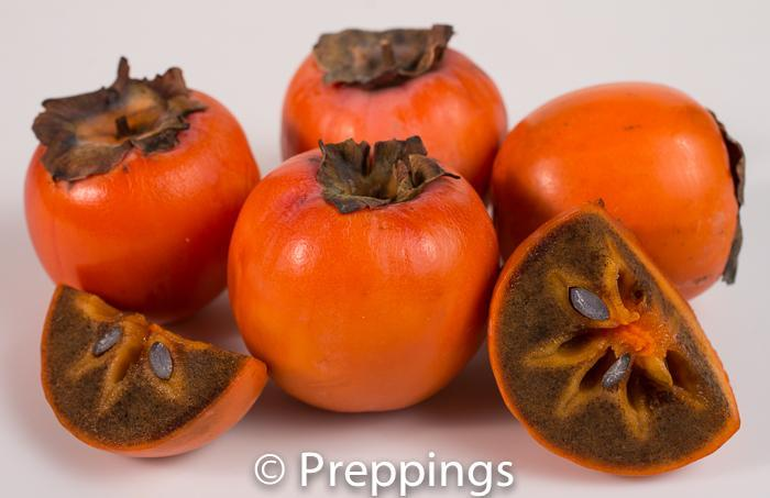 Chocolate Persimmon