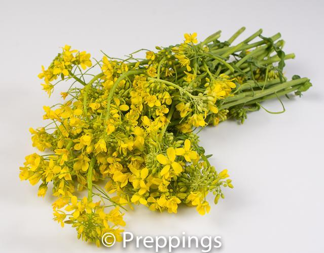 Rapini Flower