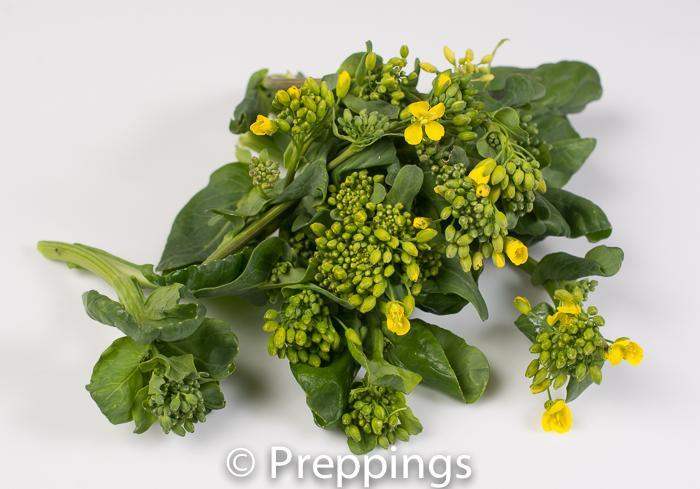 Ingredient Of The Day: Tatsoi Flower