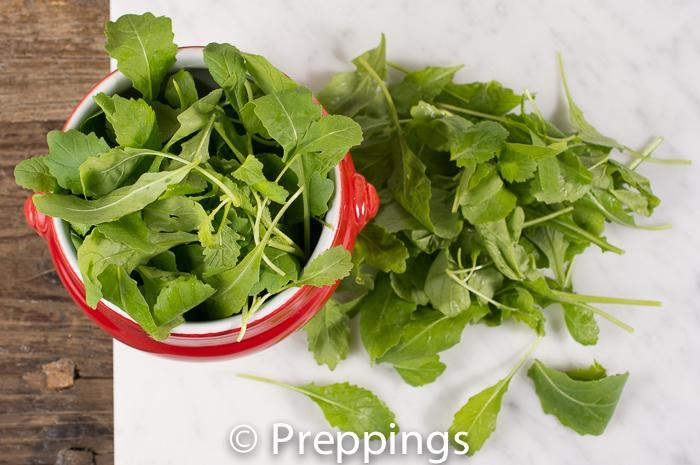 Ingredient Of The Day: Wasabi Arugula