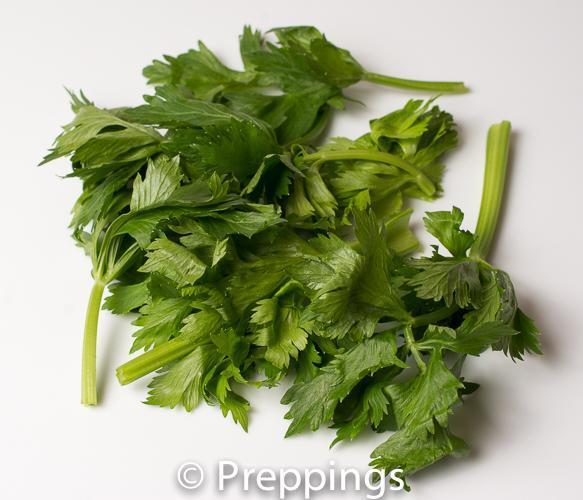 Celery Greens