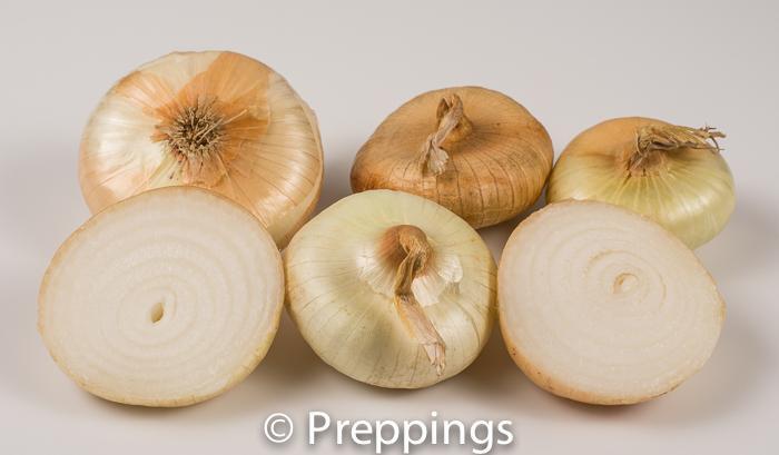 Cipollini Onion