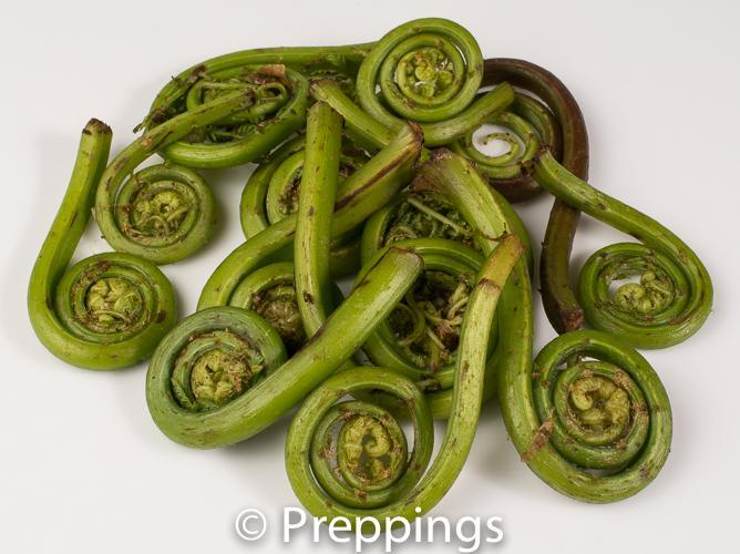 Ingredient Of The Day: Fiddlehead Fern