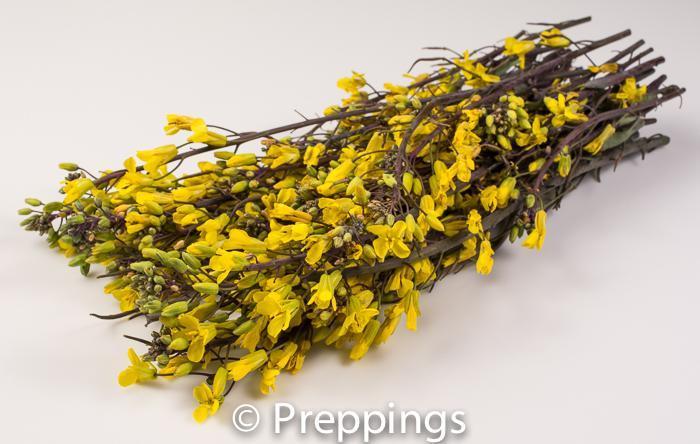 Kale Flower