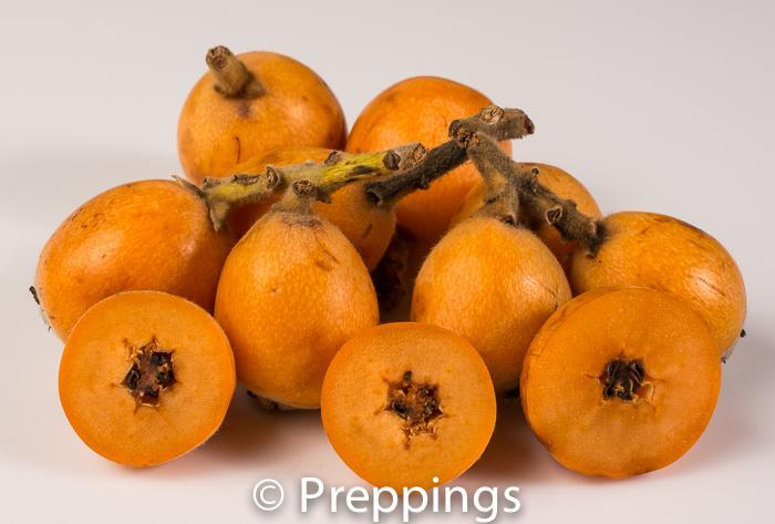 Ingredient Of The Day: Loquat