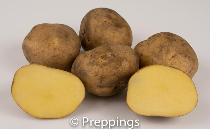Finnish Yellow Potato