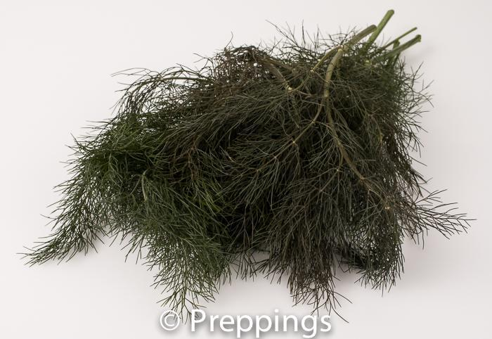 Ingredient Of The Day: Bronze Fennel Frond