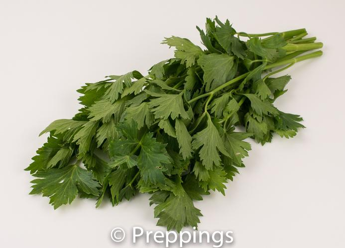 Ingredient Of The Day: Cutting Celery