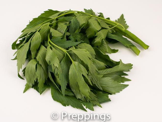 Ingredient Of The Day: Lovage