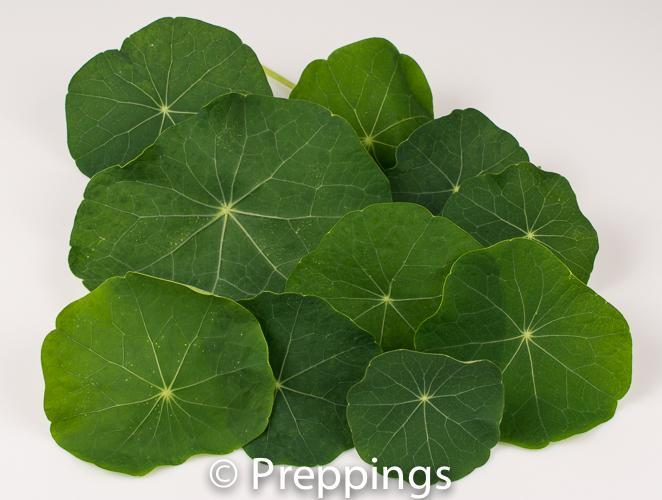 Ingredient Of The Day: Nasturtium Green