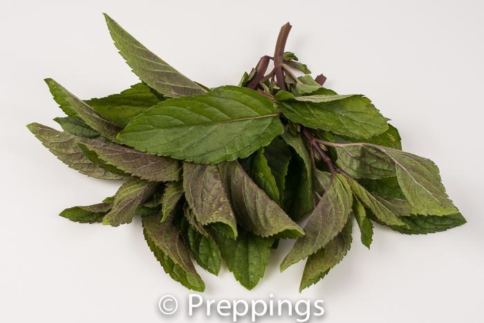 Black Pepper Mint