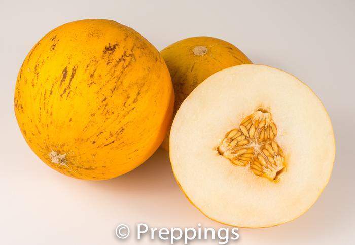 Fonzy Melon
