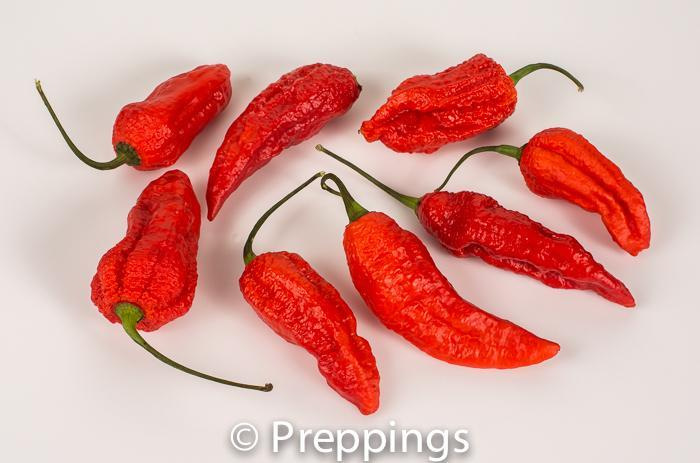 Ghost Chile Pepper