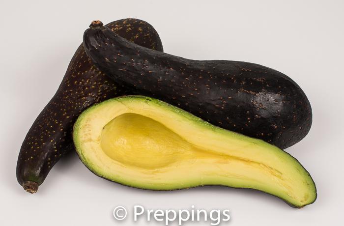 Gillogly Avocado