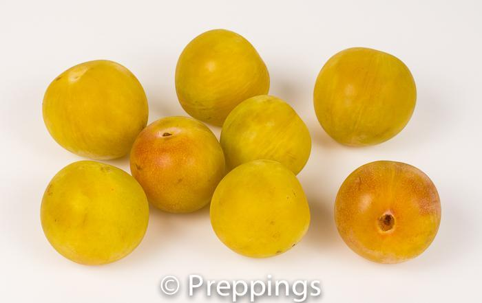 Greengage Plum
